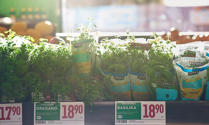 Fresh herbs in Willys store
